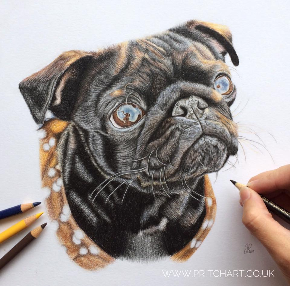 Jess Pritchard of Pritch Art drawing Nala the Pug
